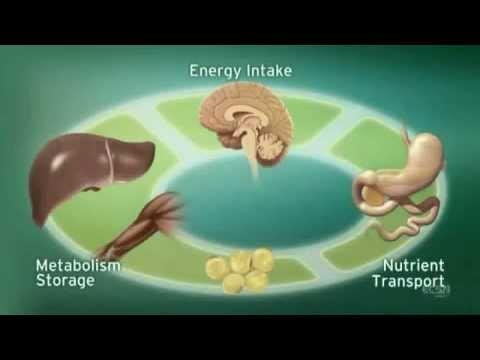 Endocannabinoid System Network - ECS Full Length Scientific Animation