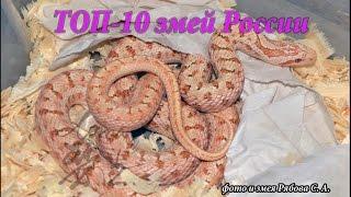 Топ 10 змей России!