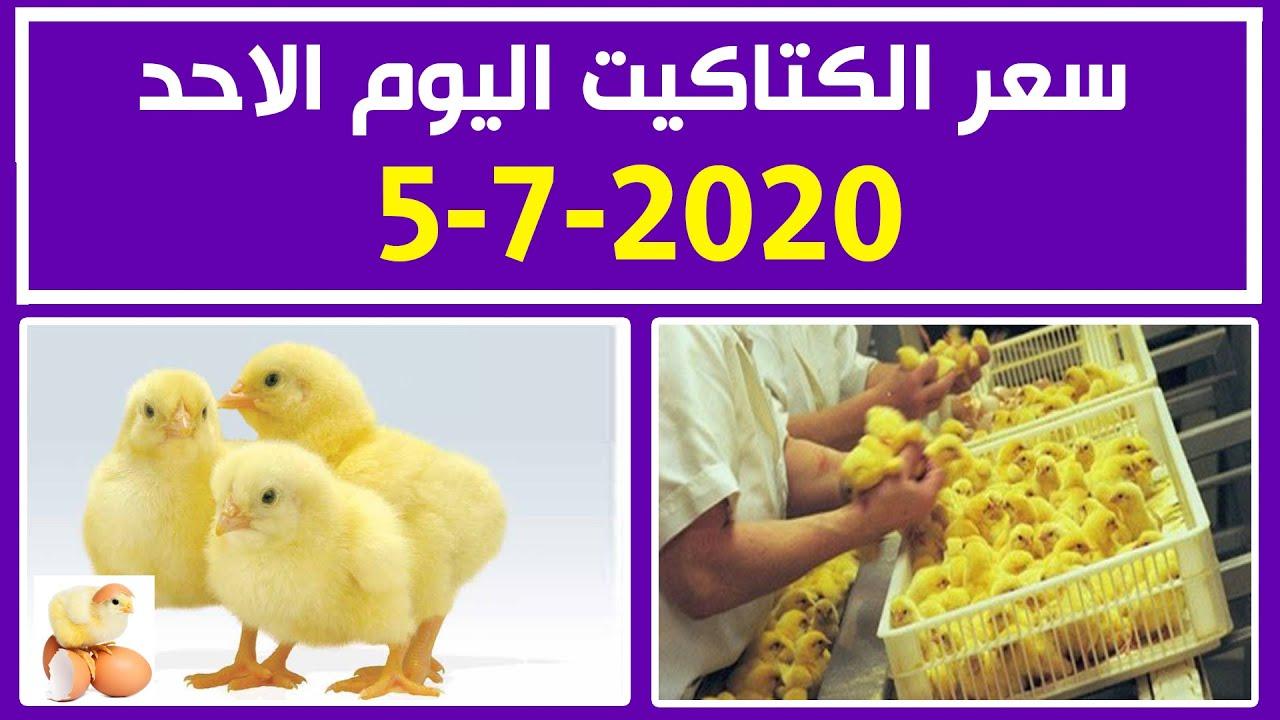 سعر الكتاكيت اليوم الاحد 5-7-2020 في بورصة الدواجن في مصر