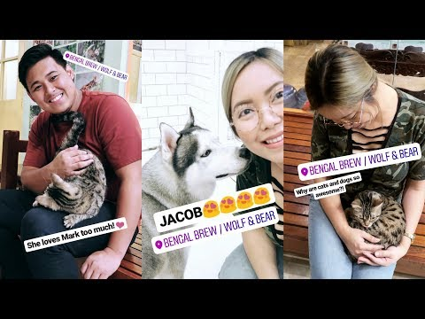 THE BEST CAT & DOG CAFE IN THE PHILIPPINES! (July 20, 2017) - saytioco