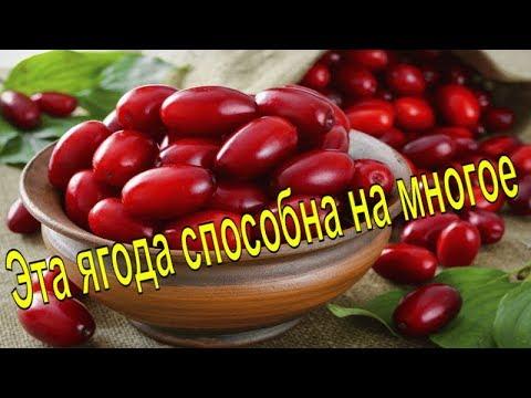 Кизил – ягода, которую советуют врачи для лечения и профилактики