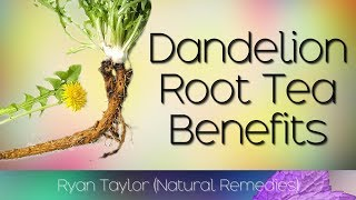 Dandelion Root Tea: Benefits & Uses