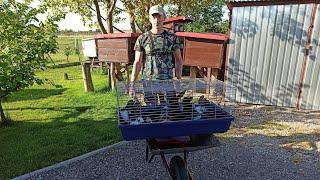 Przeprowadzka 15 królików z klatek do zagród 🐇 problemy z filmikami 🤷🏻♂️ VLOG#22