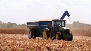 Żniwa kukurydziane na południu USA