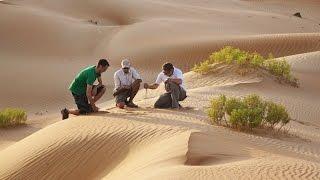 Qasr Al Sarab Desert Resort by Anantara - Desert Walk