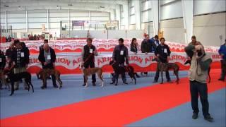Concurso Galgo Español, Sonseca 2014