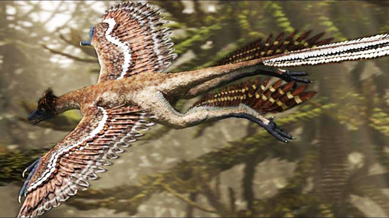 Microraptor le dinosaure chasseur volant zapping - Dinosaur volant ...