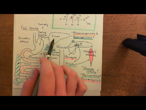 Diabetes Mellitus and Antidiabetic Drugs Part 4