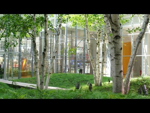 Cornelia Hahn Oberlander Projects: The New York Times Building