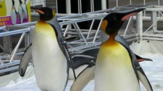 場所外、時間は日中、天気よく空気もとても澄んでいる状態で皇帝ペンギ...