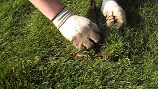 ОЗЕЛЕНЕНИЕ - Укладка рулонного газона(, 2013-12-22T19:49:48.000Z)