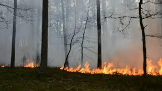 Pożar lasu Nowy Folwark 15.04.2018