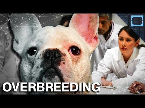 We've Been Genetically Engineering Animals for 10,000 Years