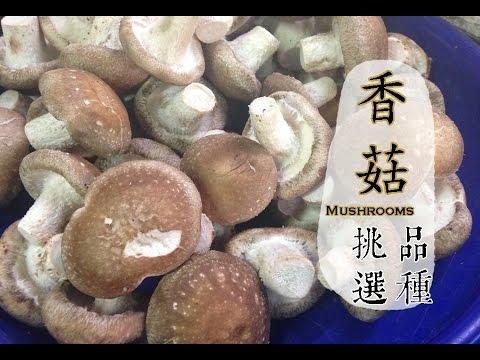 【秋】香菇如何挑選才好吃