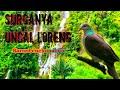 Uncal Loreng Part   Mp3 - Mp4 Download