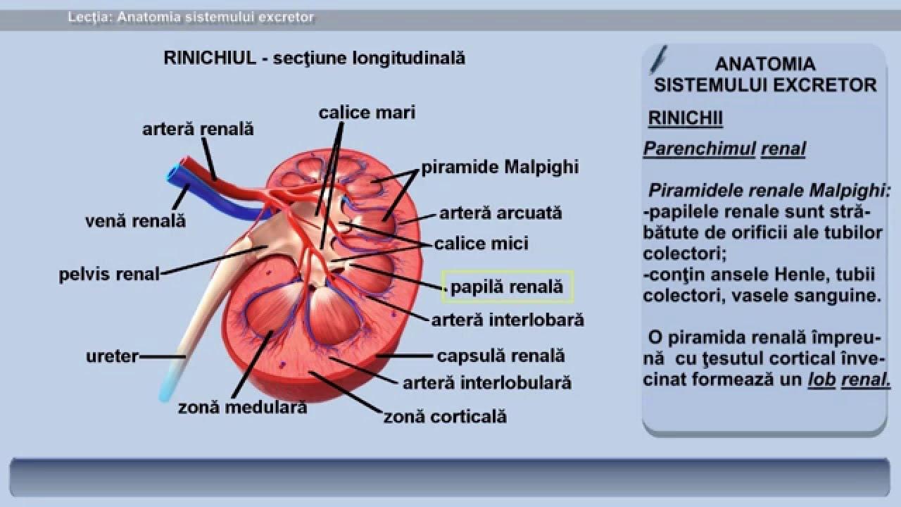 sistemul excretor ppt medicament pentru viermi nemocid