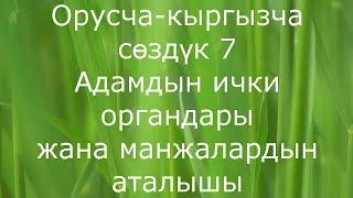 Адамдын ички органдары жана манжалардын аталышы орусча