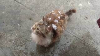 My cat is indignant that it is snowing in May