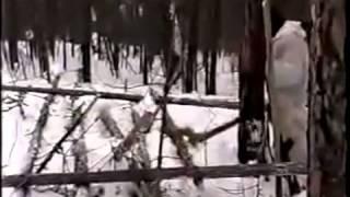 охота на медведя с лайкой зимой