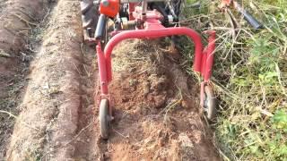 고구마 수확기 수확 동…