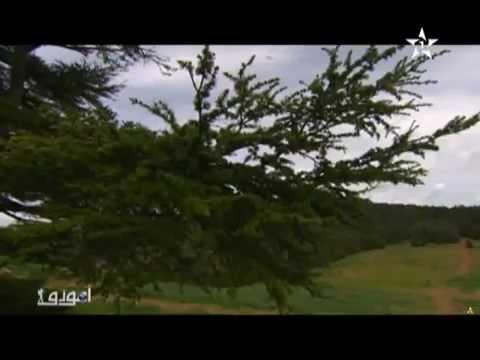 المنتزه الوطني تازكة بمدينة تازى السفر الاول