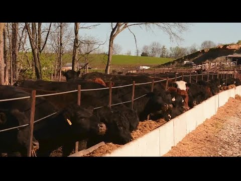 Program To Buy Beef From Local Cattle Producers Almost Too Successful