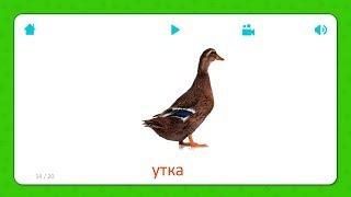 Утка - Карточки Для Детей - Домашние Животные - Карточки Домана