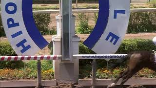 Vidéo de la course PMU PREMIO FRANCO BELGA HANDICAP