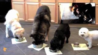 Fine-tuned Canines Fine-dining: Florida Board And Train Doggie Camp