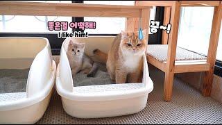화장실도 함께 들어가는 찐남매 고양이!