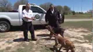 Texas A&m Forest Service Debuts Etx-based Arson Dogs - Apr 11, 2013
