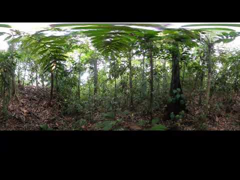 Phonography 360 : Rain Forest - Osa Peninsula - Costa Rica (8.500276, -83.369845) - 360 Sound