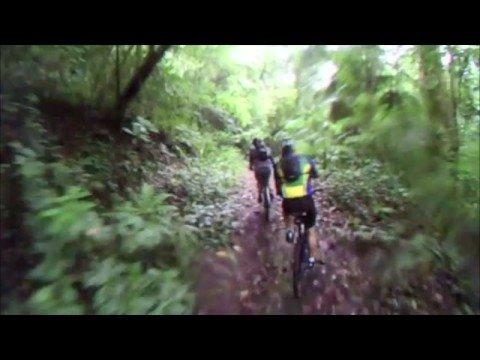 panama rainforest plantation road