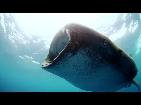 Fazer - Wasi (Official Video)