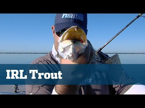 Solid Light Tackle Trout Fishing On Grass Beds In The Indian River - Florida Sport Fishing TV