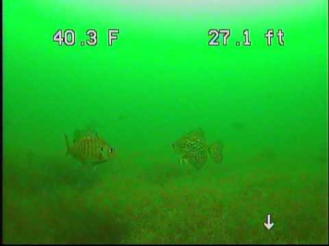 Firemans Club Underwater Video - 2014 1122