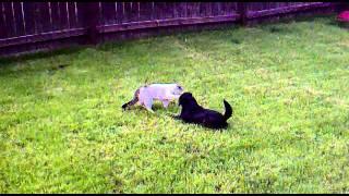 собака и кот счастливы вместе