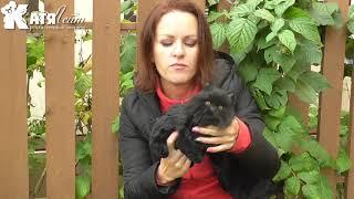 Котенок черный игрушка