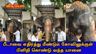 பீடாவை எதிர்த்து மீண்டும் கோவிலுக்குள் பிளிறி கொண்டு வந்த யானை..! | Manakula Vinayagar Temple