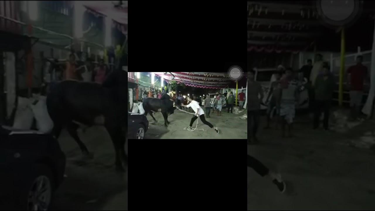Qurbani Video 2019 | Eid ul Adha Qurbani | Cow Qurbani in Karachi | Karachi Market Updates