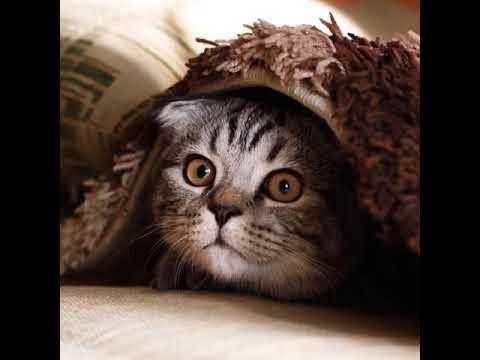 La Buonanotte Notte Fatta Da Un Gatto