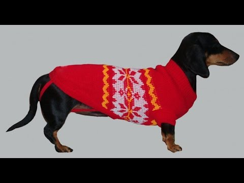 Как связать свитер для собаки своими руками.Одежда для собак на .