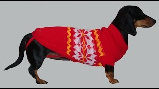 Вязаная одежда для собак! Простой свитер для собаки! Вязаная одежда для собак своими руками