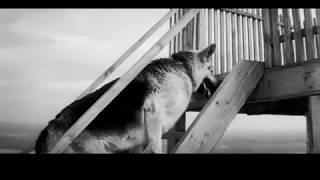 Ко мне, Мухтар (часть 15) Советский художественный фильм