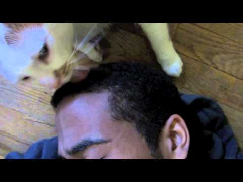 Cat licking me hair from YouTube · Duration:  1 minutes 34 seconds
