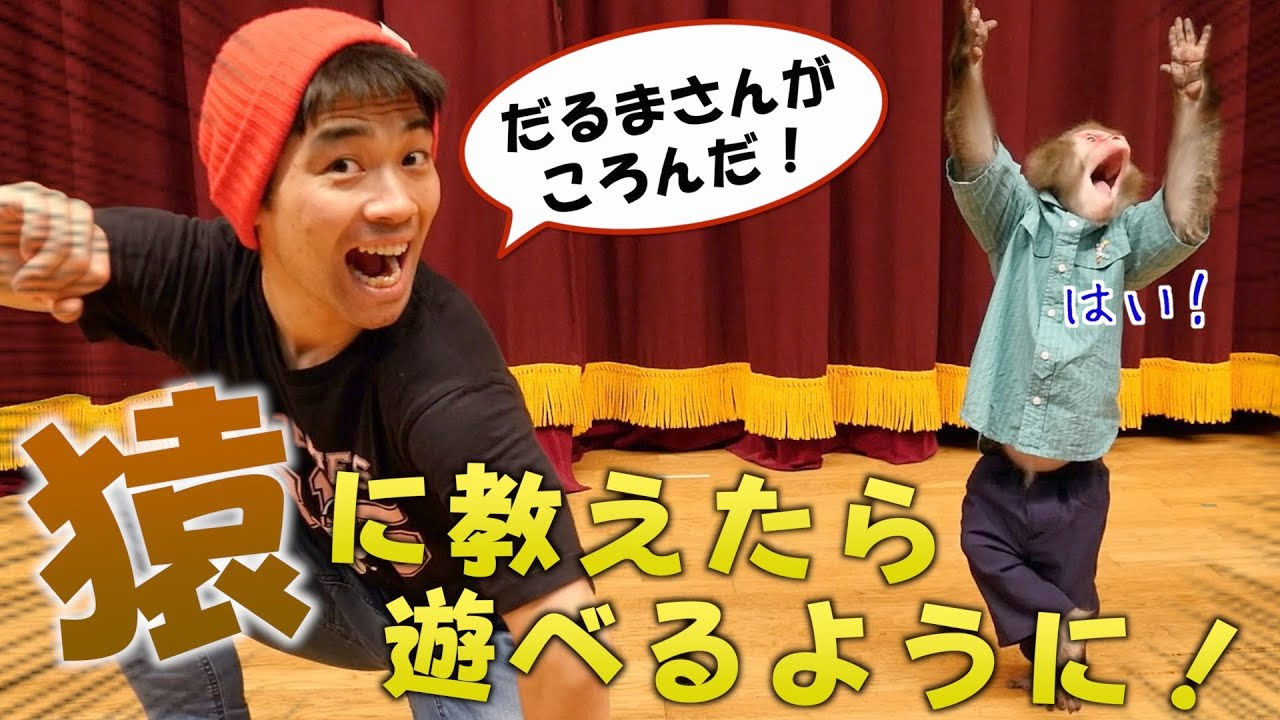 【猿 vs 人間】「だるまさんがころんだ」対決がめっちゃ白熱した!!