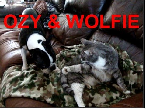OZY & WOLFIE - Funny Dog & Cat Show