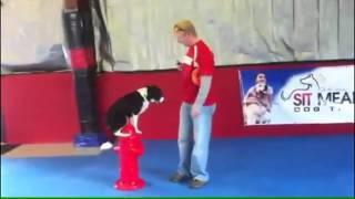 Dog Training Made Fun Cleveland-akron Ohio