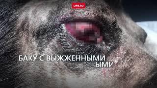Собаке выжгли глаза кислотой