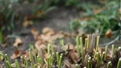 Gardening Tips - Our Fall Garden Checklist